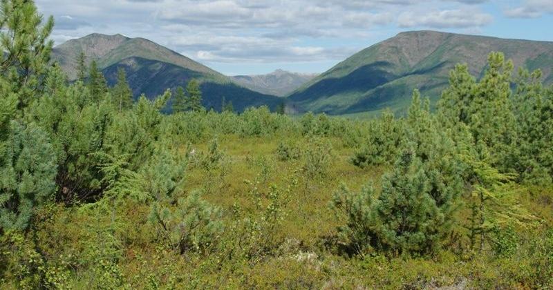 Полицейские Колымы отыскали в лесу травмированного 75-летнего мужчину
