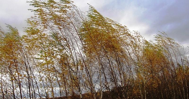 В городе Магадане и городских округах ожидается сильный дождь, ветер