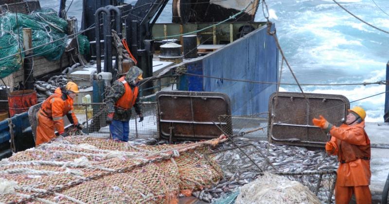 Сергей Носов: Сегодня отраслевые рыбодобывающие предприятия Колымы находятся в относительно стабильном состоянии
