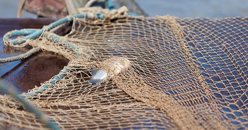 Жители Магадана на рыбалке смогут использовать жаберные сети