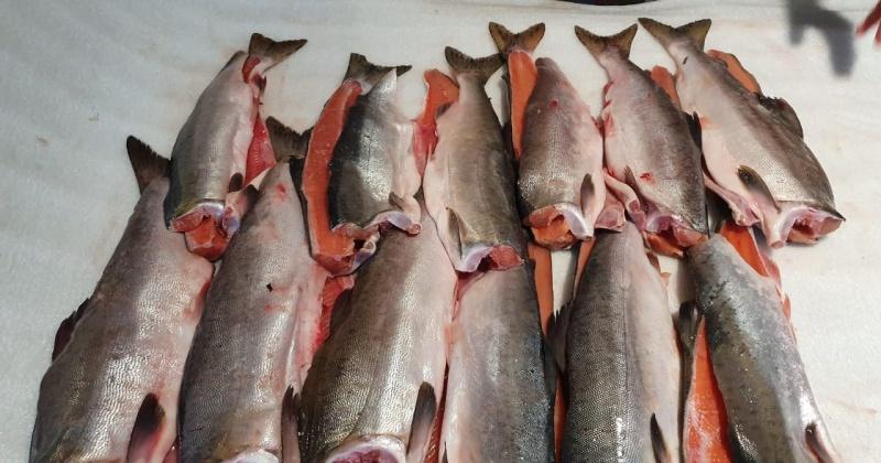 """С начала года на """"материк"""" из Магадана вывезено  653 партии рыбопродукции общим весом более 9 тысяч тонн"""