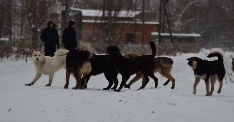 На решение проблемы с бездомными собаками в следующем году Магадану надо 12 млн. рублей