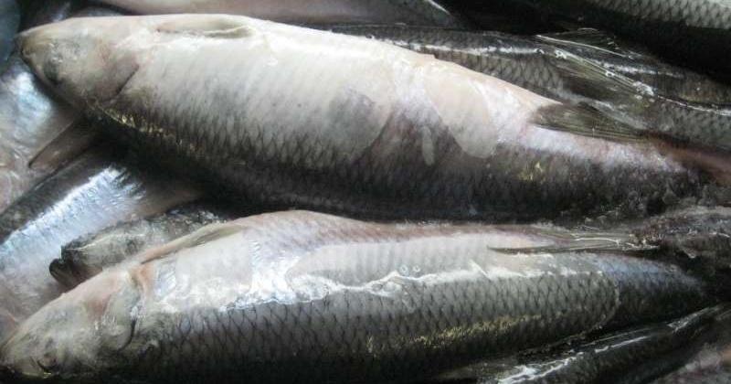 В Магаданской области распределены квот для организации любительского рыболовства на территории в 2020 году