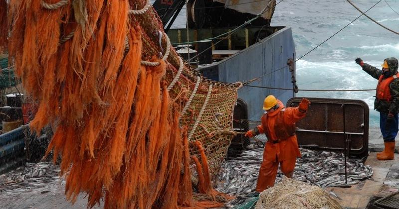 Юрий Трутнев: работу по развитию рыбохозяйственного комплекса на Дальнем Востоке надо продолжать