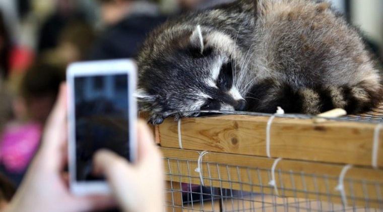 В Россельхознадзоре Магадана работает «горячая линия» для сообщений, связанных с ликвидацией (закрытием) контактных зоопарков