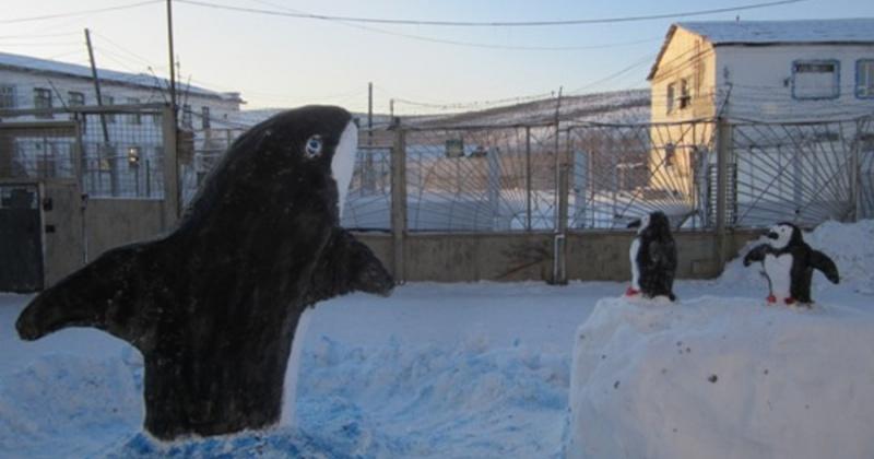 Пингвины и косатки появились в колонии Магадана
