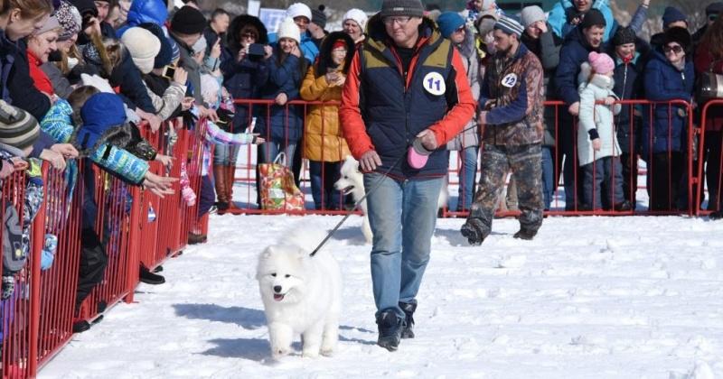 Выставка-парад собак северных пород пройдет в Магадане 28 марта в рамках этнофестиваля «Дзялбу»