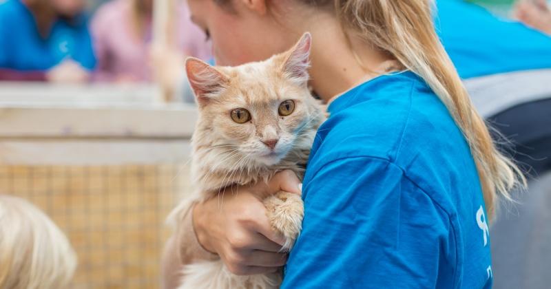 В России предложили ограничить разведение кошек и собак