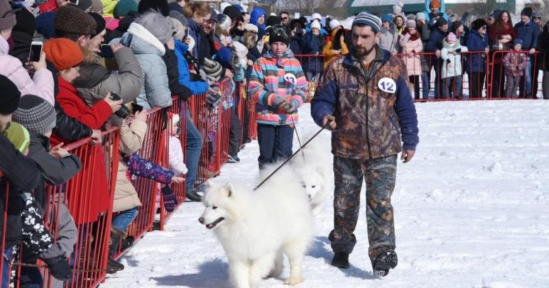 Один день остается, чтоб подать заявку на участие в выставке-параде собак северных пород в Магадане
