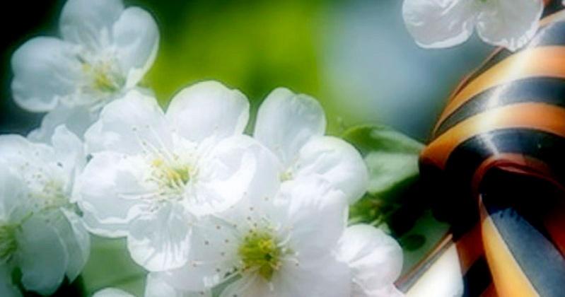 В России и СНГ высадят 27 млн деревьев в память о каждом, кто погиб в Великой Отечественной войне