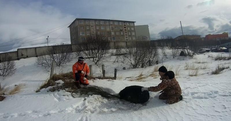 Спасатели в Магадане эвакуировали со льда бухты Нагаева собаку
