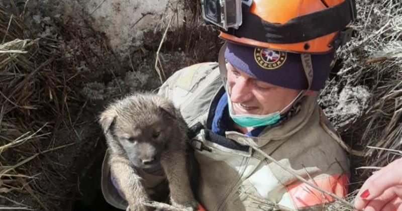 Маленьких щенков вытащили из колодца спасатели Магадана