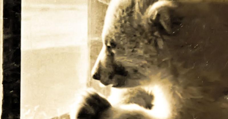 70 лет назад зоологический уголок открыли в городском парке Магадана