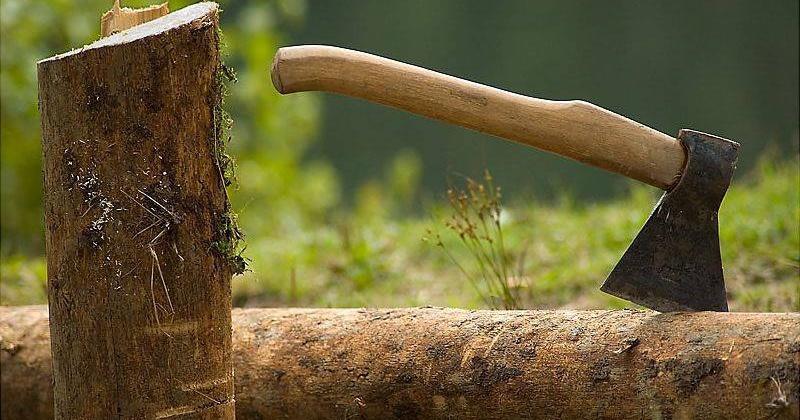 Условный срок и штраф получил колымчанин за незаконную рубку леса