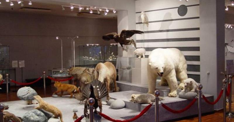 Четыре музея Магаданской области представлены на международном фестивале «Интермузей–2020»