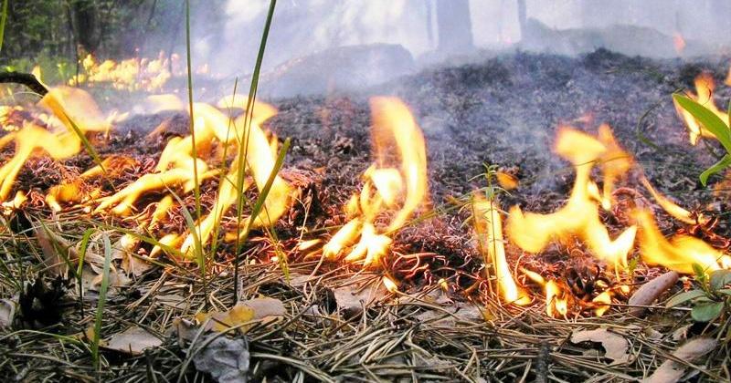 В мае в Магадане зарегистрировано  девять загораний мусора на открытой территории и 41 возгорание сухой травы