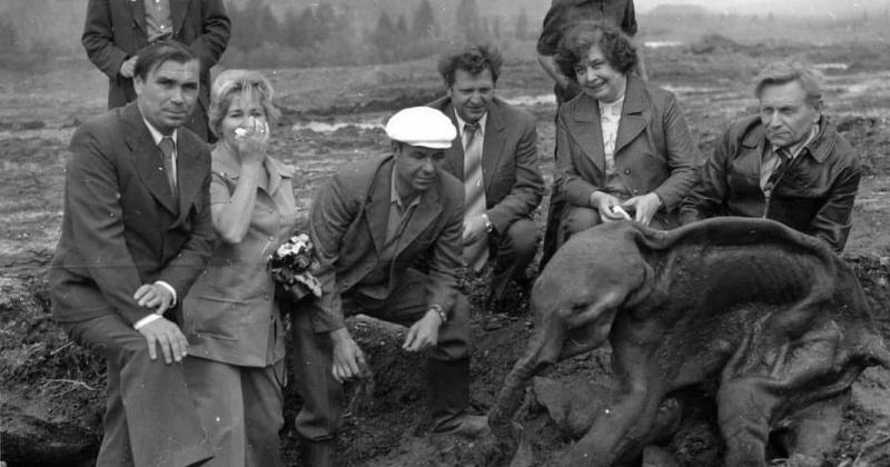 Мамонтенка Диму нашли на Колыме 43 года назад