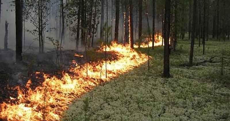 Высокая пожарная опасность ожидается в Хасынском районе