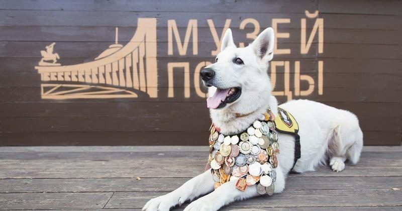 До 7 августа юные художники города и области смогут стать участниками конкурса «Портрет фронтовой собаки»