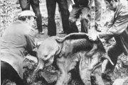 Страницы истории удивительных находок мамонта.