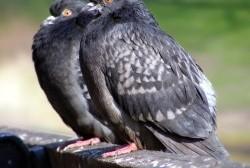 В Магадане  меньше голубей и чаек не стало