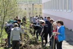 В Магаданской области подведены предварительные итоги акции «Лес Победы»