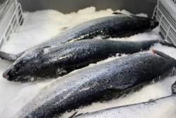 Михаил Тумашов: В последние годы жители нашего округа не знают проблем со свежей рыбой