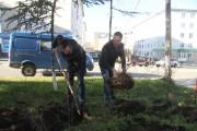 Свыше 50 деревьев и кустарников посадят магаданские полицейские