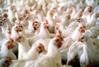 На птицефабрике «Дукчинская» строится инкубационный цех