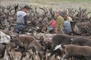 В Магаданской области появилась родовая община коренного малочисленного народа Севера «Кадар» (Скала)