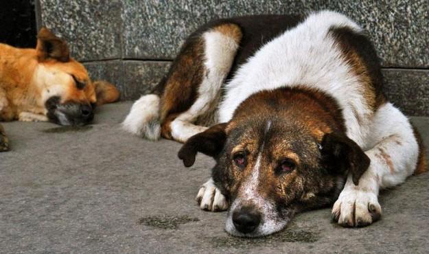 Законопроект о безнадзорных животных в Магаданской области требует дополнительных публичных слушаний