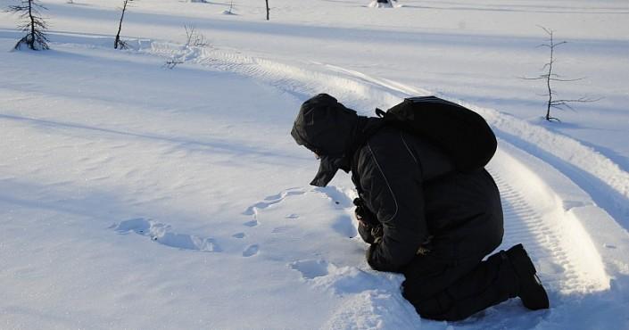 Зимние маршрутные учеты в Магаданском заповеднике проходят в экстремальных условиях