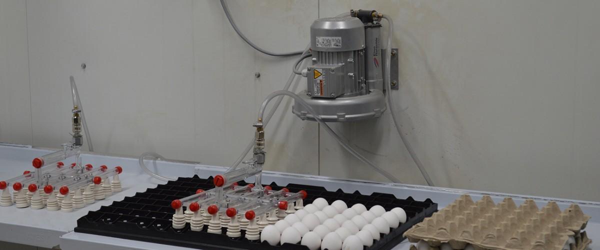 На птицефабрике «Дукчинская» готовятся к закладке яиц в инкубатор