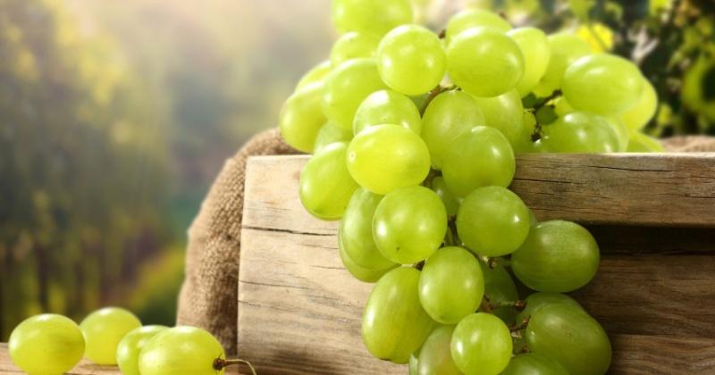 О прибытии винограда в Магадан не оповестили контролеров