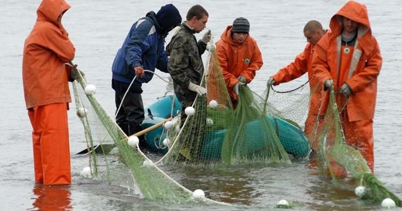 На Колыме распределили дополнительные объемы вылова тихоокеанских лососей в соответствии с фактическим освоением на отдельных рыбопромысловых участках
