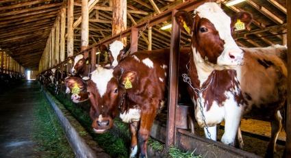 Ситуация с болезнями животных в Магаданской области признана благополучной