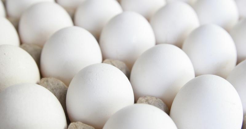 Более миллиона штук куриного яйца производства ООО «Птицефабрика «Дукчинская» вывезено с территории Колымы в прошлом году