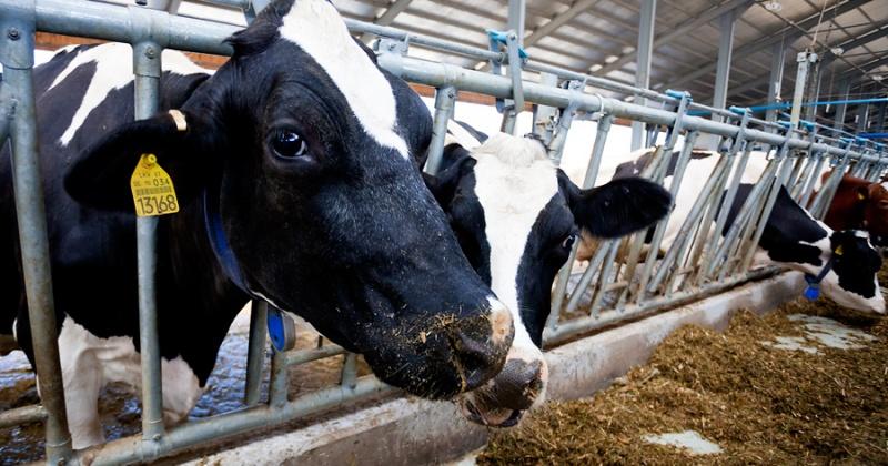 Диагностические мероприятия позволили в 2016 году выявить на Колыме 35 больных лейкозом животных