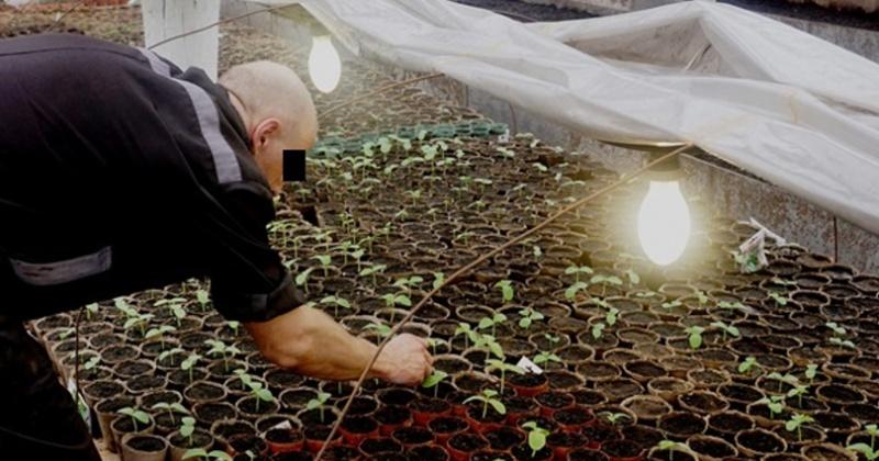 Первый урожай огурцов в магаданской колонии №4 снимут в начале мая