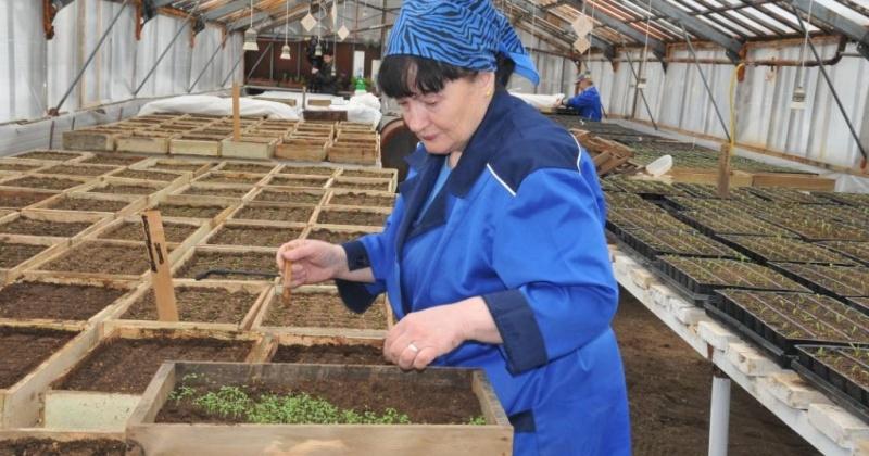 176 тысяч цветов предстоящим летом украсят клумбы Магадана