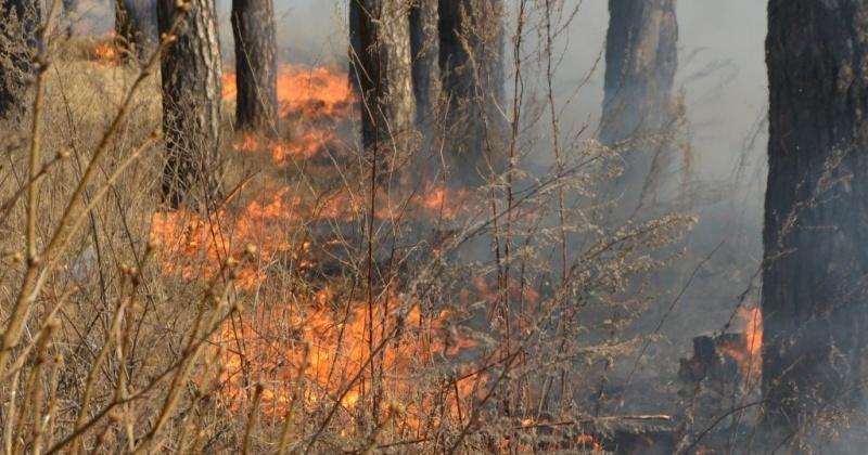 О правилах пожарной безопасности в лесопожарный период напоминают  магаданские спасатели