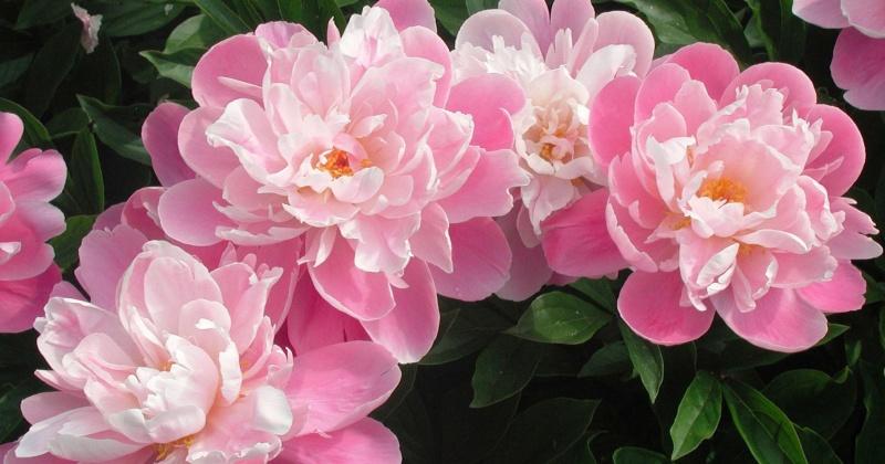 При поставке цветов магаданский предприниматель дважды нарушил закон