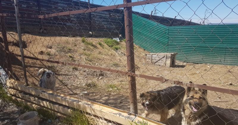 Создание муниципального приюта для безнадзорных животных в Магадане  под вопросом