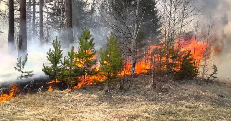 В трех городских округах Магаданской области сохраняется высокая вероятность возникновения лесных пожаров
