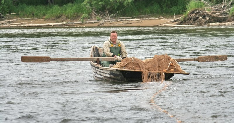 Всего на добычу лососей и гольцов для всех категорий пользователей в Магаданской области оформлено 73 разрешения