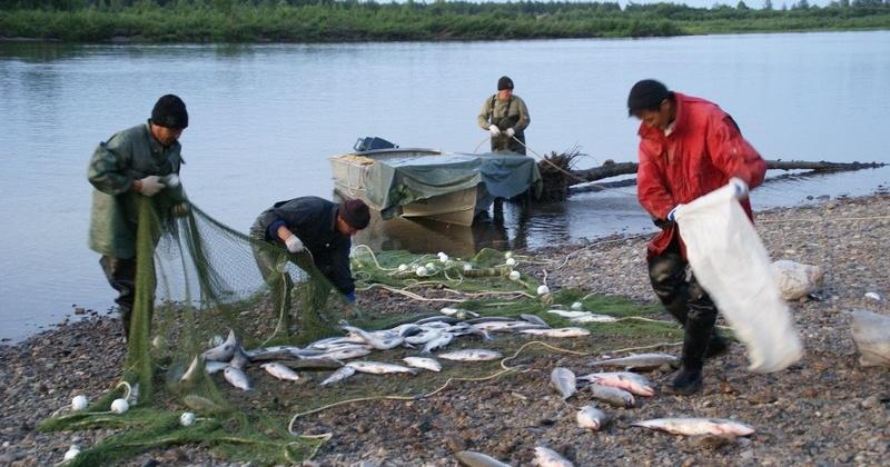 28-летний житель поселка Палатка, осуществлял вылов рыб лососёвых видов без разрешительных документов