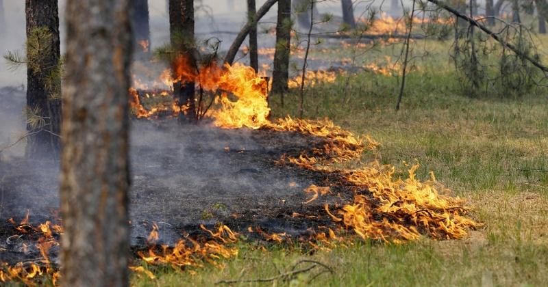 Высокая пожарная опасность ожидается в Среднеканском, Ягоднинском городских округах