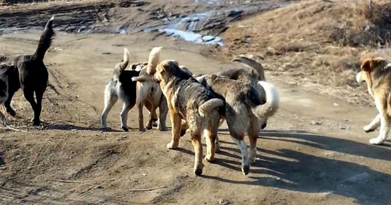 В Магаданской области случаев заболевания бешенством животных не было уже 16 лет