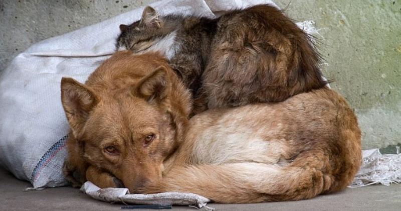 В Магаданской области открыт первый муниципальный приют для безнадзорных животных