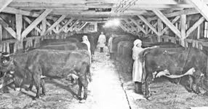 50 лет назад (1968) образован совхоз «Снежный» – крупнейшее свиноводческое хозяйство Магаданской области